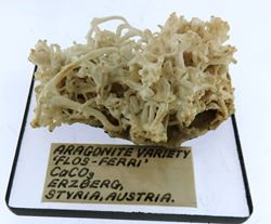 "Picture of Aragonite var ""Flos Feri""  (Austria)"