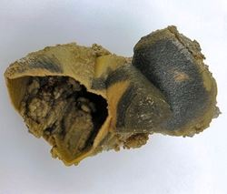 Picture of Siderite Epimorph after Calcite (Aggeneys, South Africa)