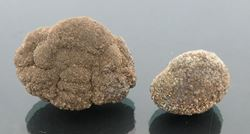 Picture of Pyrite (New York, USA)